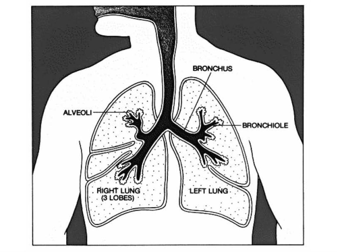 korrekte atmung bei crunches